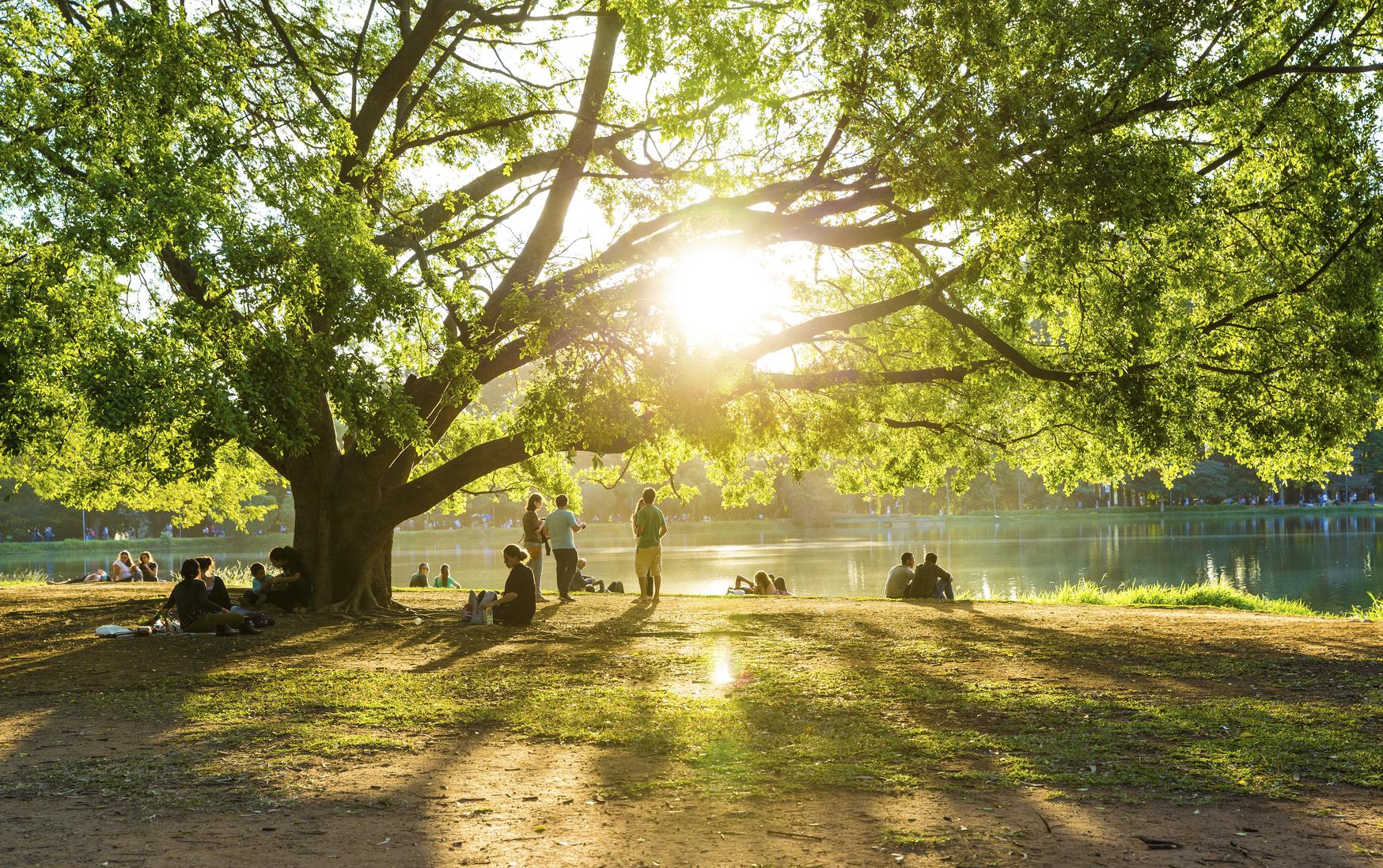 Os 10 melhores parques de São Paulo