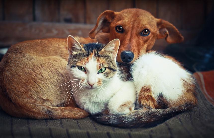 Entenda como funciona a inteligência de cães e gatos