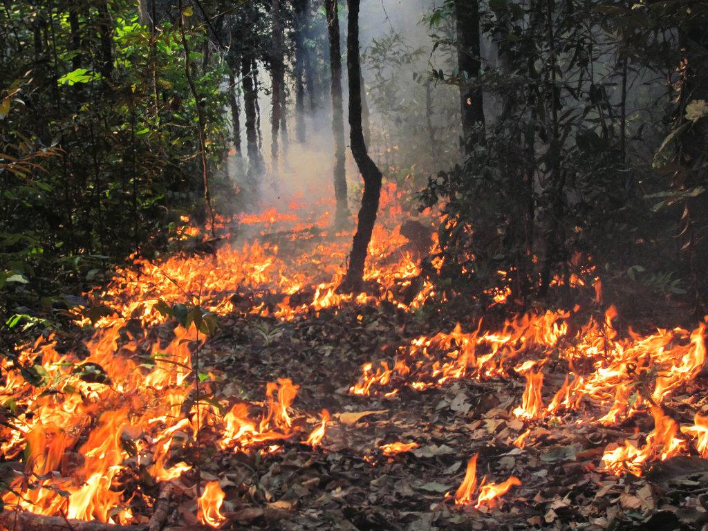 Os efeitos invisíveis das queimadas nas florestas