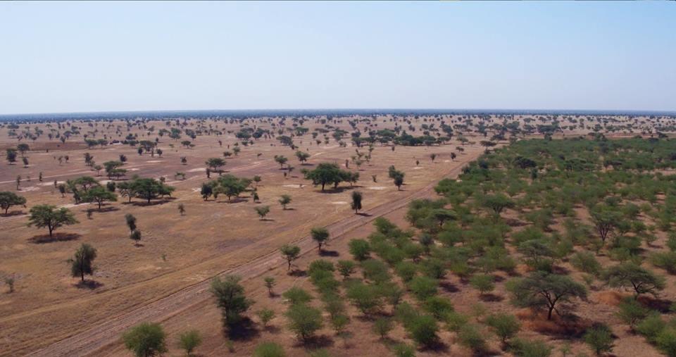 Corredor verde de mais de 7 mil km pode salvar África da desertificação