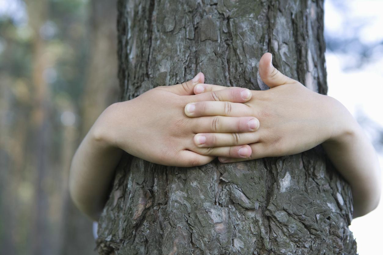 Estudos comprovam que abraçar árvores faz bem à saúde