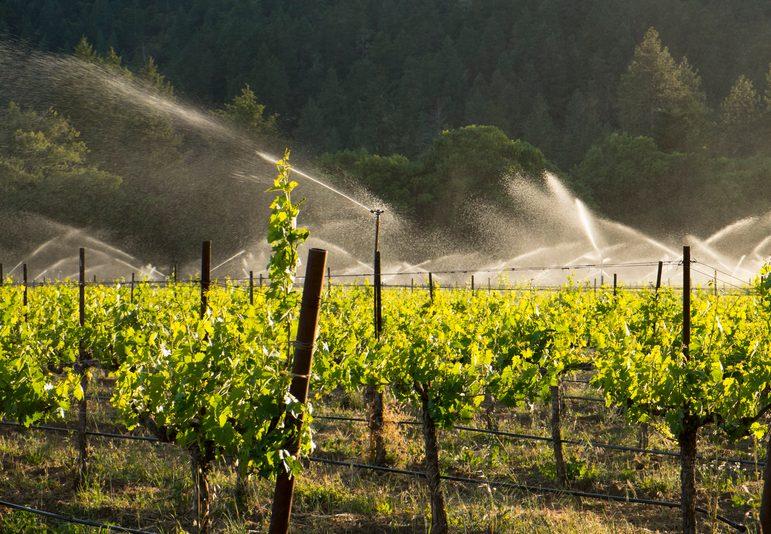 Entenda como o sistema de irrigação pode auxiliar a produção de orgânicos