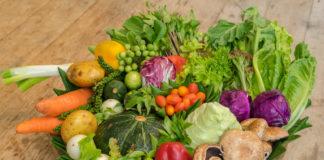 agricultura organica sp