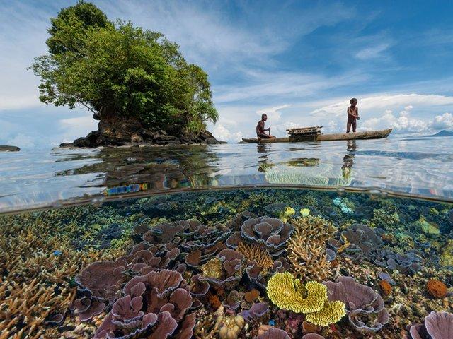 Emissões de CO2 deixam oceanos mais ácidos e podem levar espécies à extinção