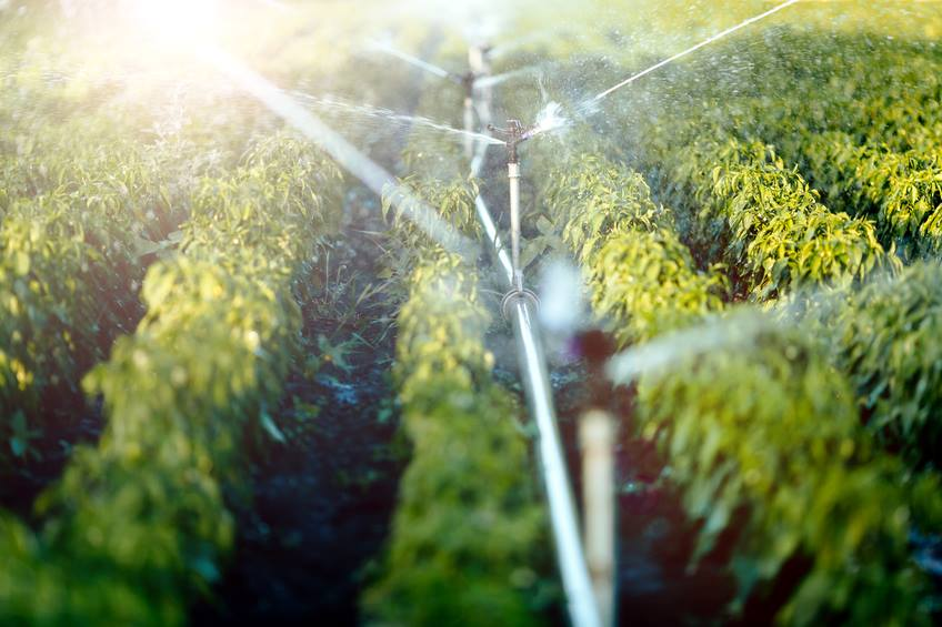 Entenda a importância e como medir pH da água para produzir orgânicos