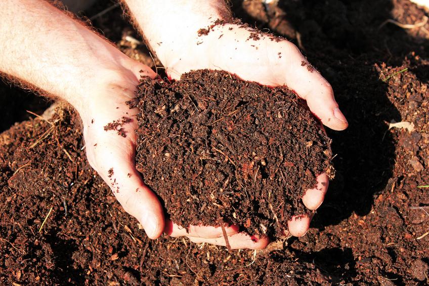 Manual grátis mostra os benefícios e ensina como fazer adubo orgânico em casa
