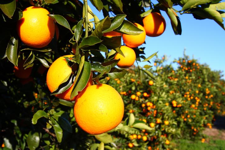 Anvisa divulga quais são os alimentos mais contaminados por agrotóxico