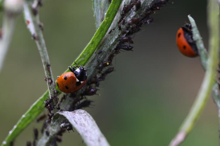 Especialista dá dicas para o controle de pragas em plantios orgânicos
