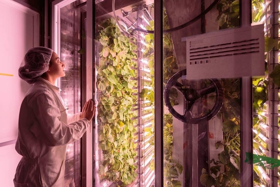 Empresa reaproveita contêineres para criar mini-fazendas urbanas em Paris