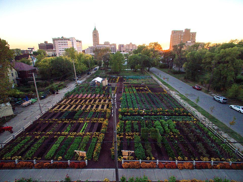 Horta em área abandonada de Detroit produz alimentos para 2 mil famílias