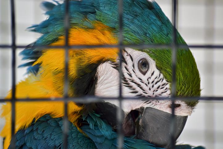 Polícia do RJ prende mulher que mantinha animais silvestres em apartamento
