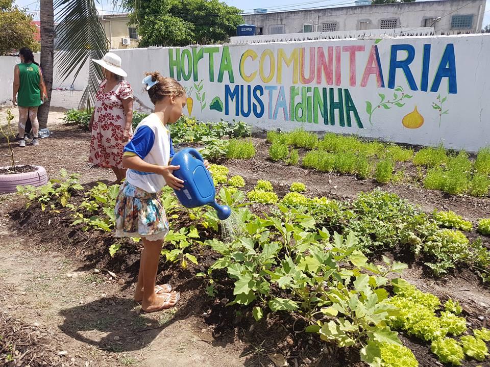 Recife transforma áreas abandonadas nos morros em hortas comunitárias