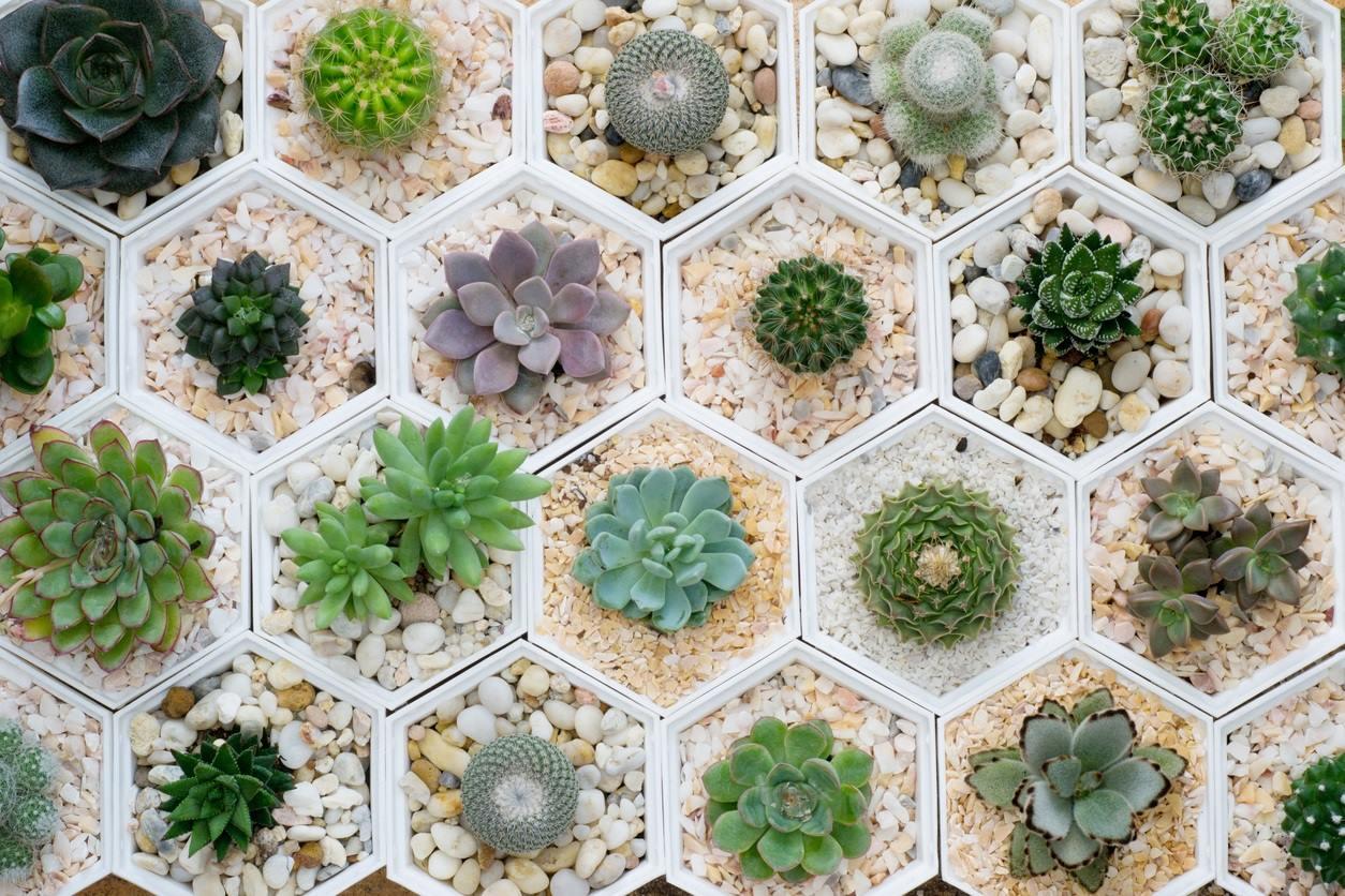 SP tem inscrições abertas para curso grátis de botânica e plantas ornamentais