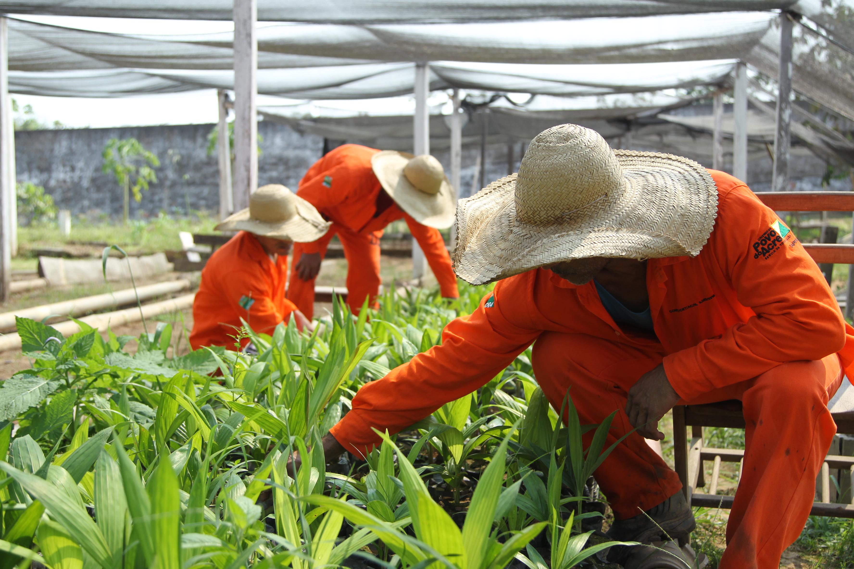 Presos no Acre recebem diploma em horticultura orgânica