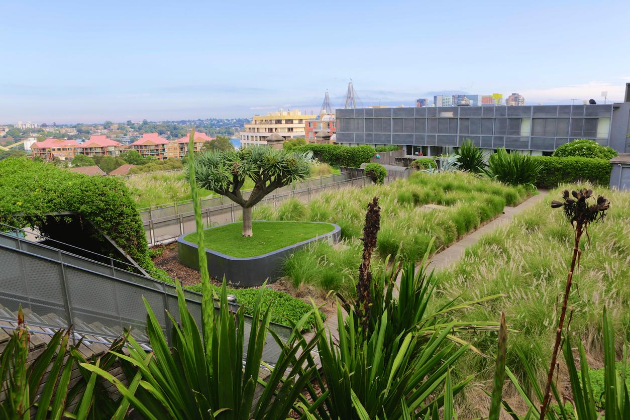 Especialista dá dicas sobre benefícios e instalação de telhados verdes