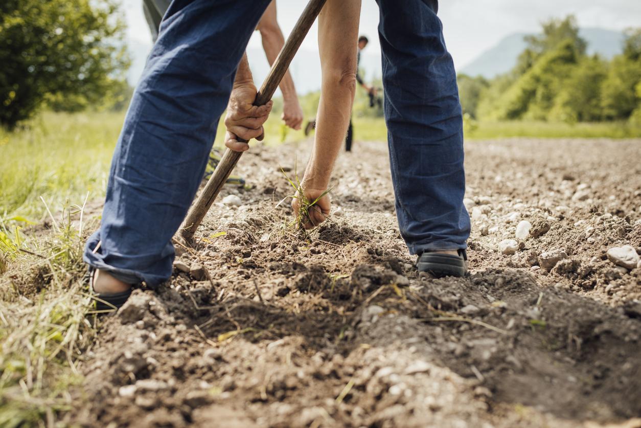 Livro grátis ensina como colocar a agroecologia em prática