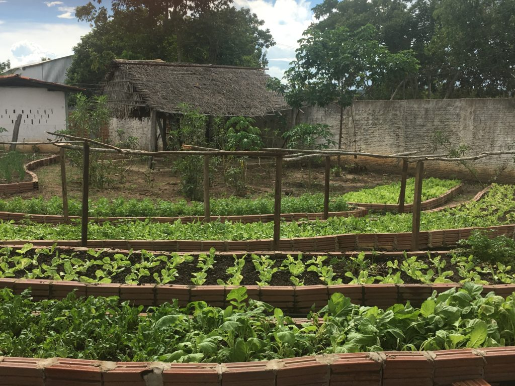 Horta da ETI do Campo Aprígio 2