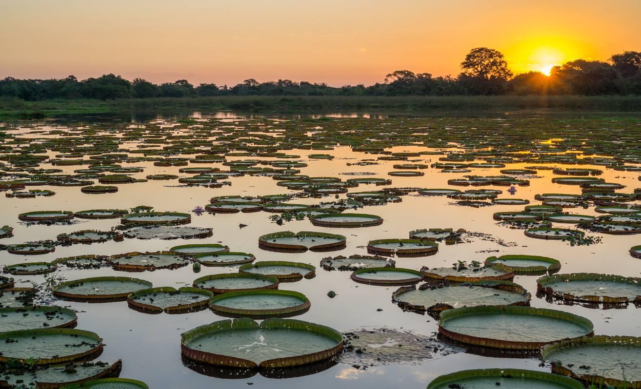 WWF-Brasil pede a aprovação da Lei do Pantanal