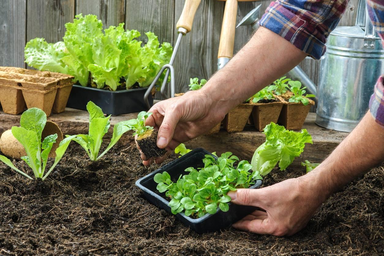 Sesc em SP terá série de encontros sobre técnicas de agricultura urbana