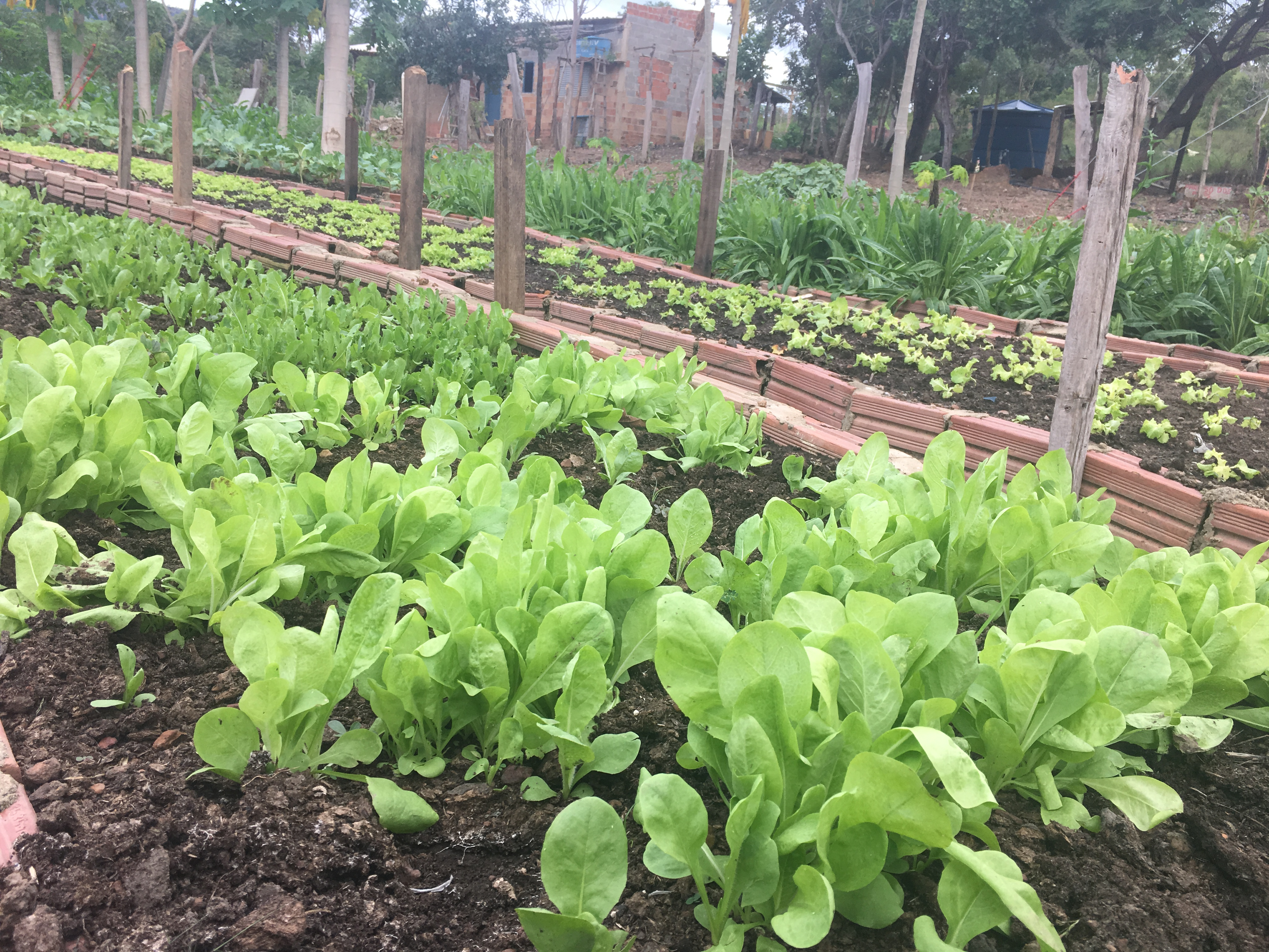 Horta cultivada por alunos ajuda a abastecer nove escolas municipais em Palmas
