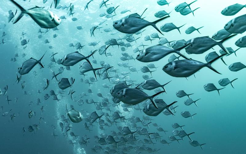 Oceanos em todo o mundo estão lentamente perdendo oxigênio