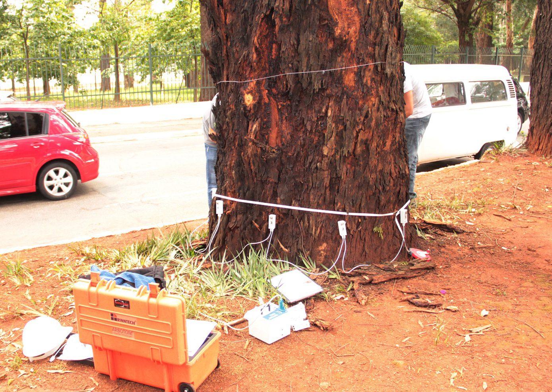 Prefeitura de SP usa aparelho de tomografia para analisar saúde de árvores
