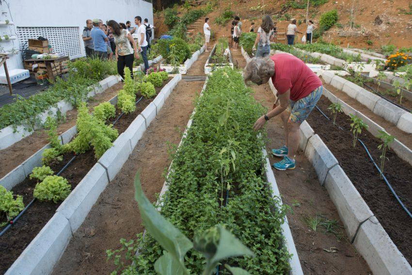 Terreno baldio em meio a prédios vira horta urbana em Salvador