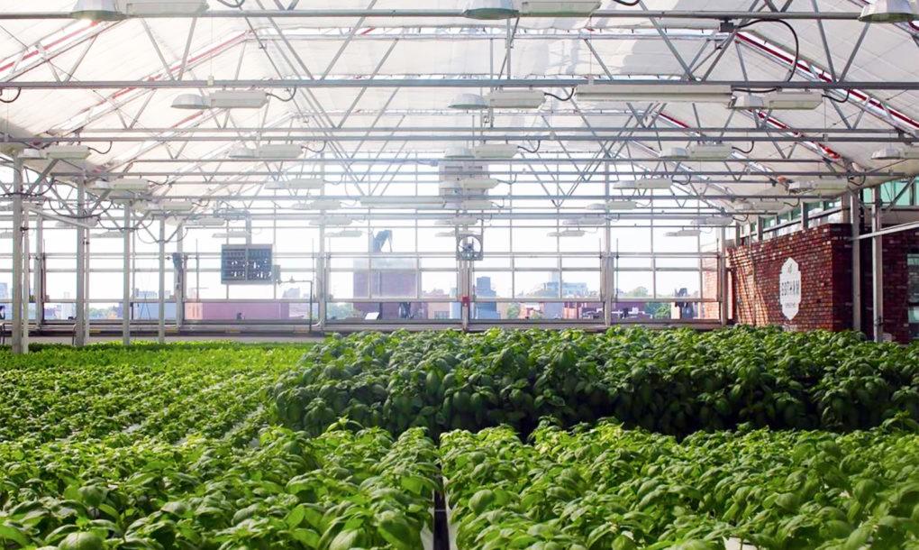 Maior fazenda em cobertura do mundo produz 10 mi de vegetais orgânicos por ano
