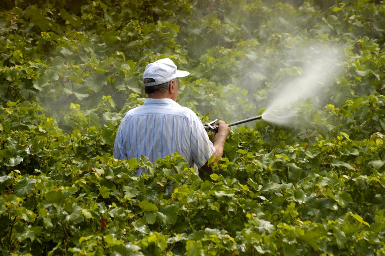 Estudo identifica agrotóxicos mais frequentes em alimentos consumidos no Brasil
