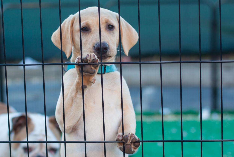 São Francisco cria lei que obriga pet shops a venderem apenas animais resgatados