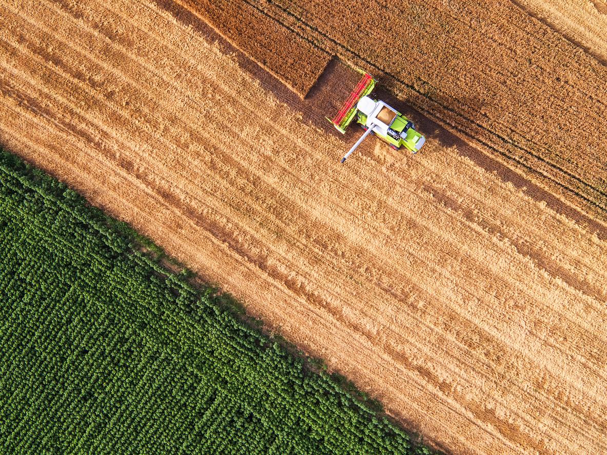 Ongs acusam Burger King de ligação com desmatamento do Cerrado