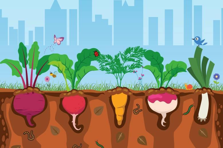Cartilha ensina passo a passo de hortas orgânicas em espaços urbanos