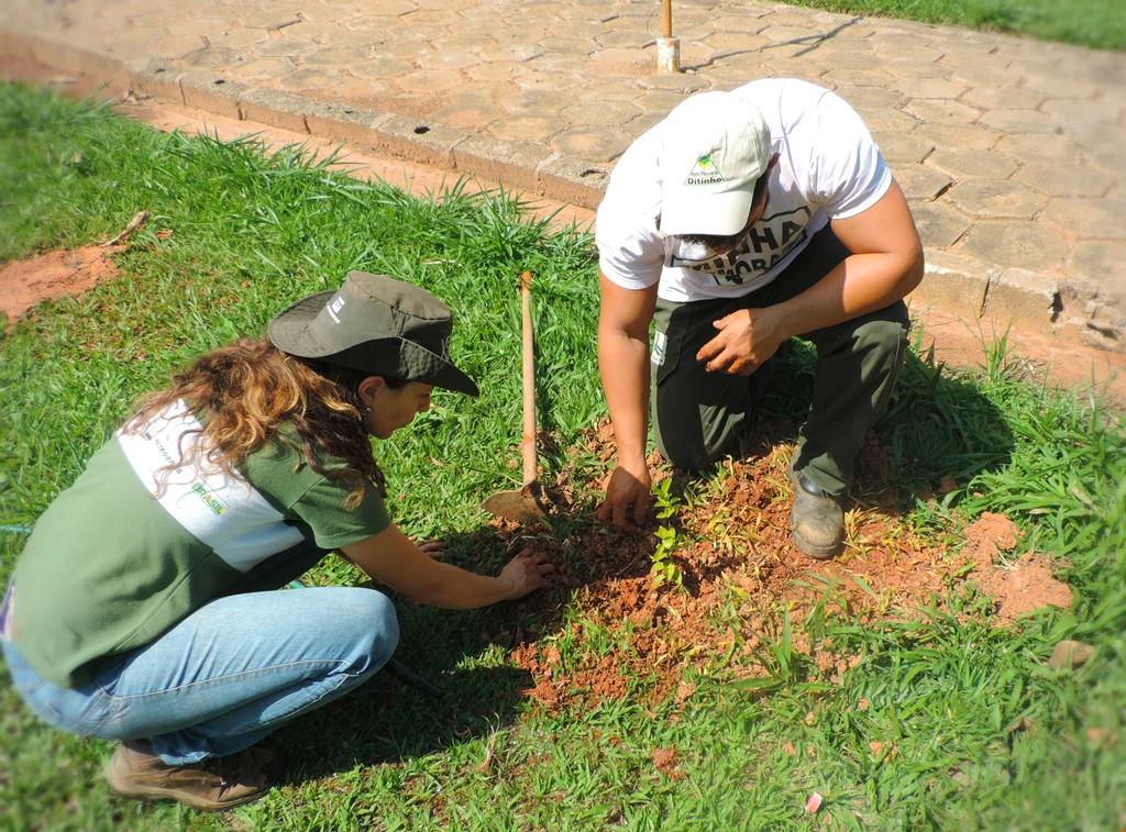 Lindóia (SP) recebe novas mudas de árvores nativas