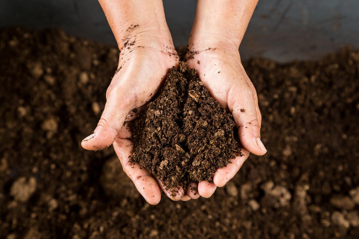 Saiba como fazer compostagem doméstica para gerar renda