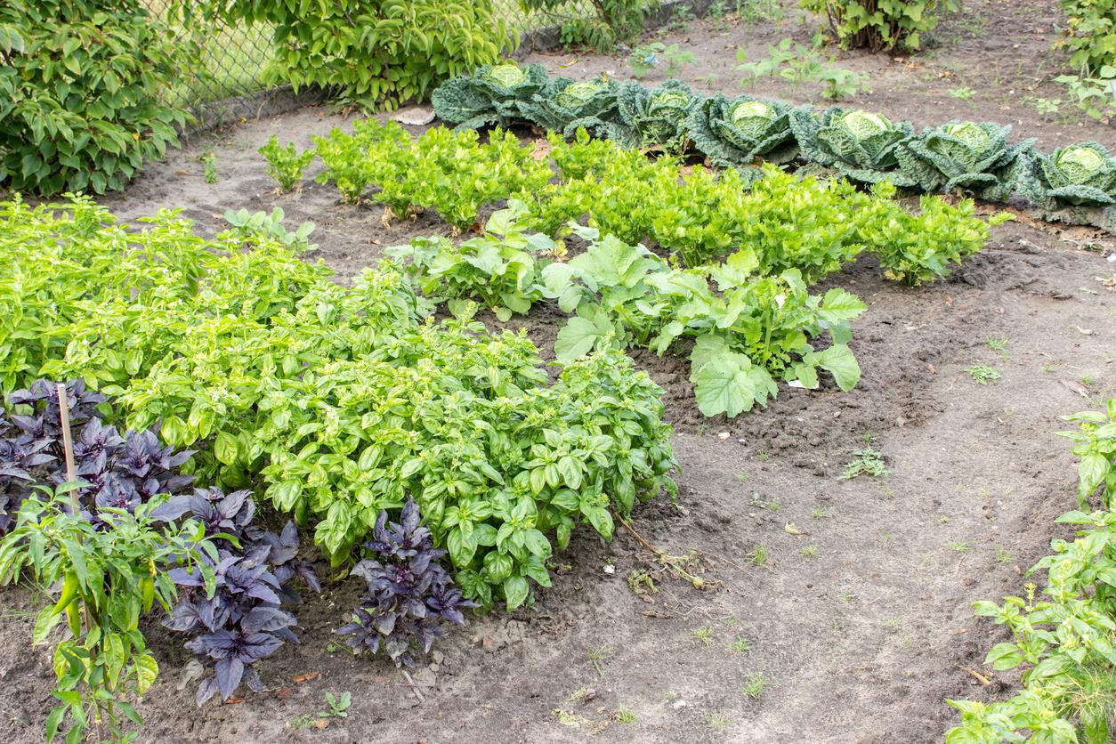 Agricultura orgânica em pequena escala é única forma de combater fome no mundo, afirma ONU