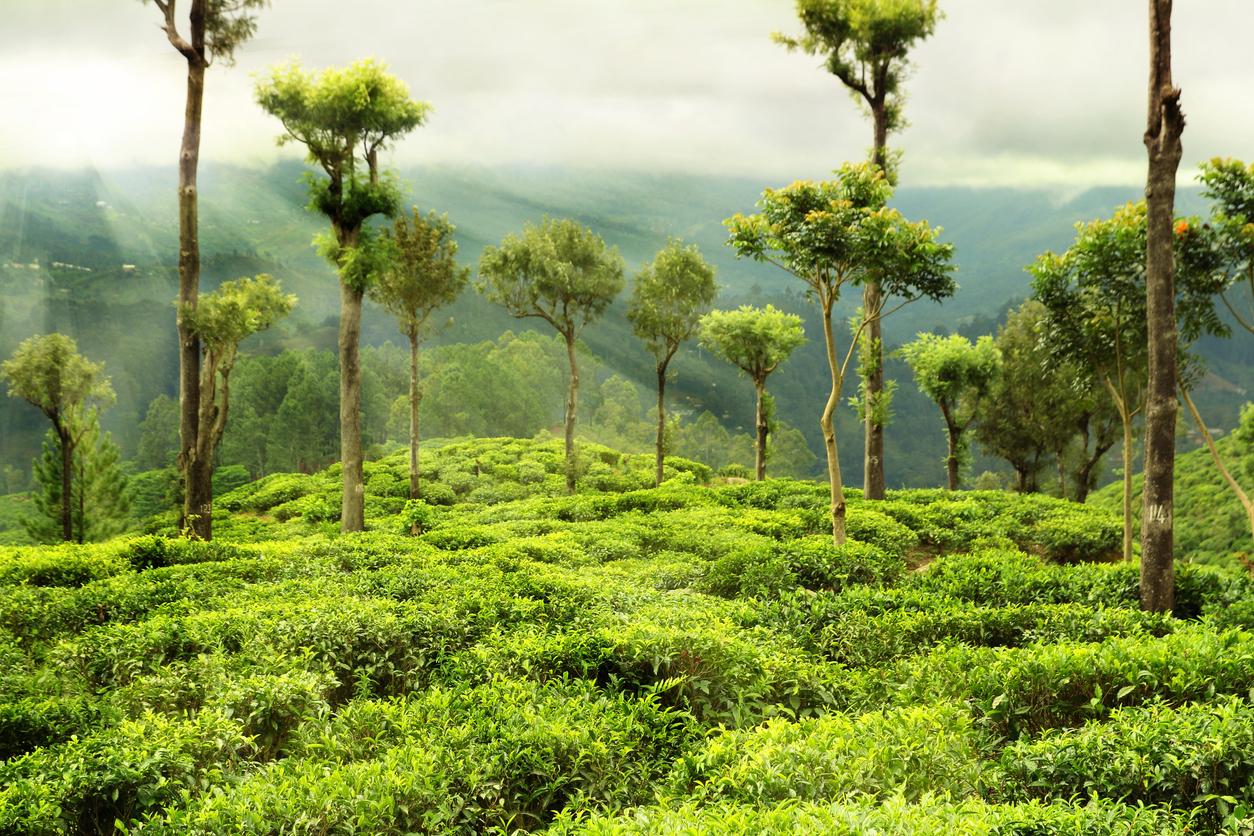 Índia planeja investir 6,2 bilhões de dólares para criar novas florestas