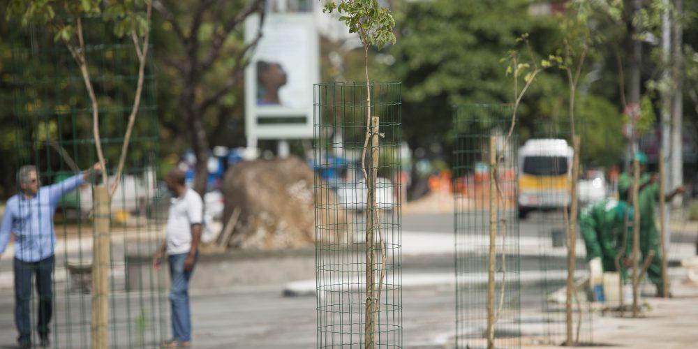 Avenida movimentada de Salvador ganha 50 árvores da Mata Atlântica