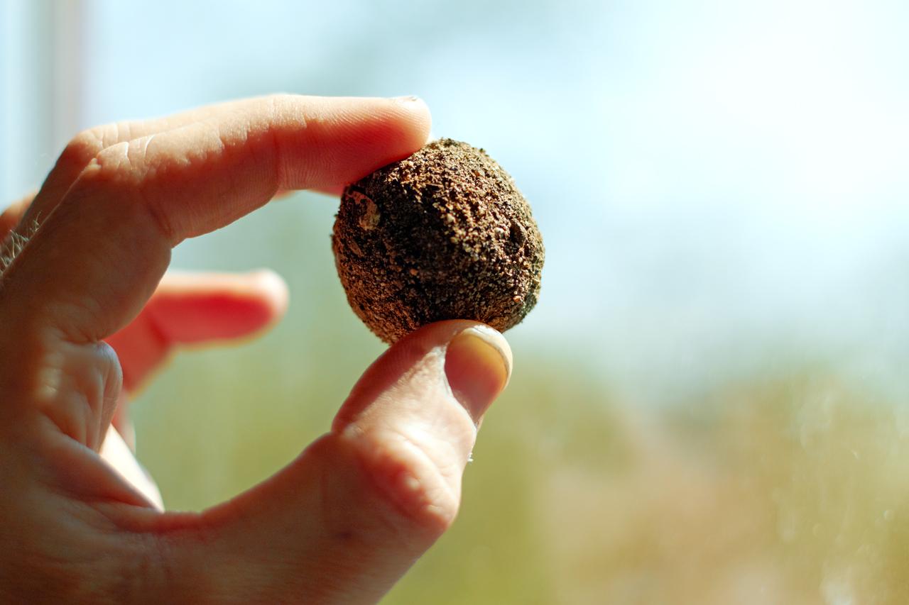 Aprenda a fazer bomba de semente em oficina gratuita