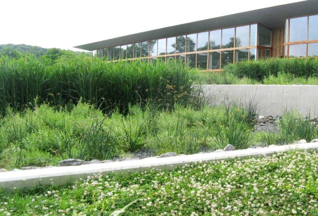 Tratamento de esgoto doméstico com plantas é alternativa para evitar poluição dos rios - CicloVivo