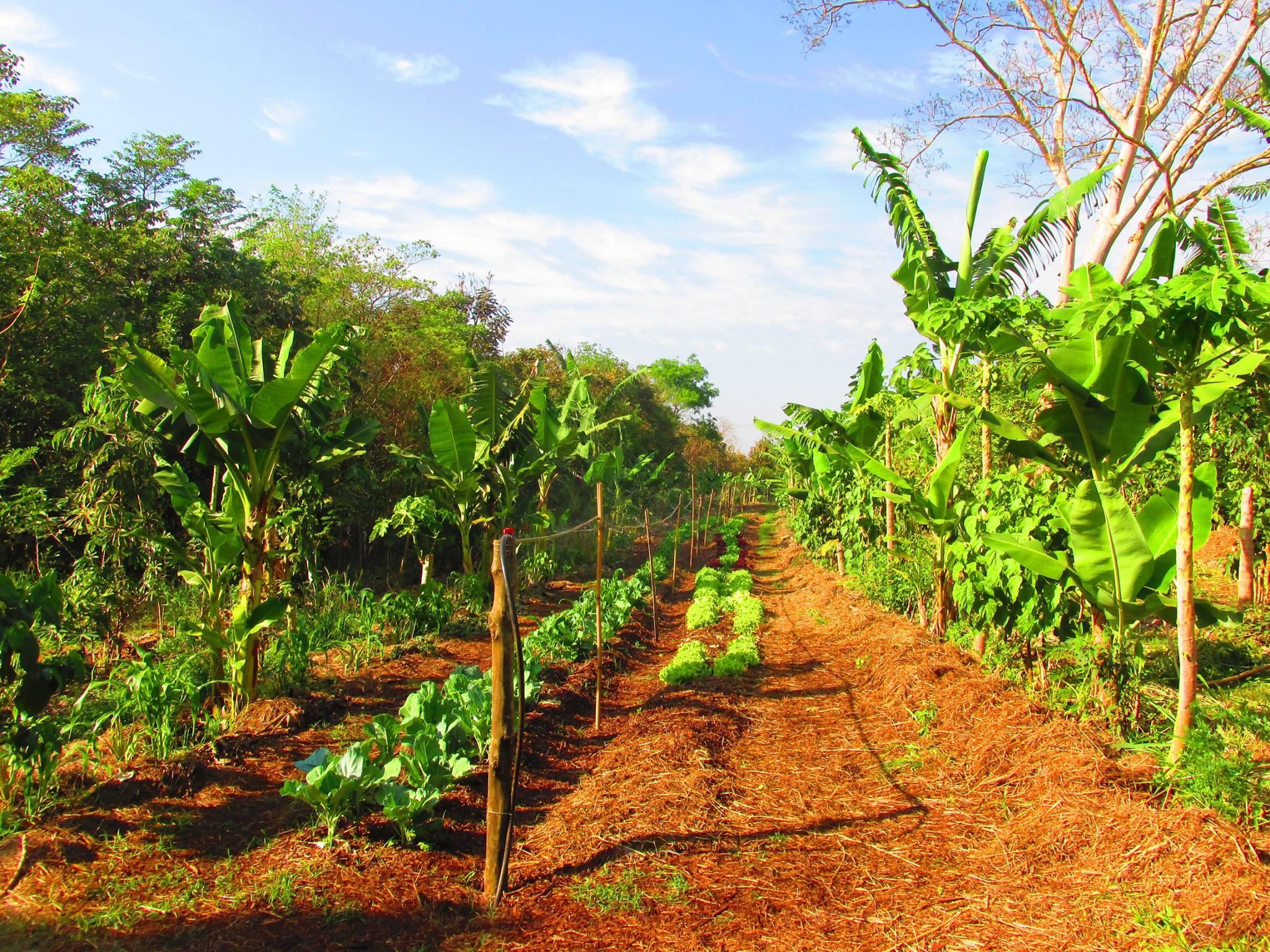 Saneamento ecológico e agrofloresta são temas de curso em SP