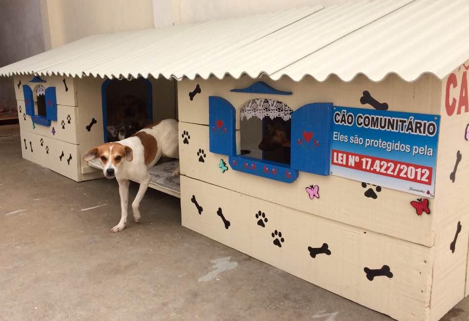 """Moradora de Ponta Grossa faz """"cãodomínios"""" para proteger animais do frio"""
