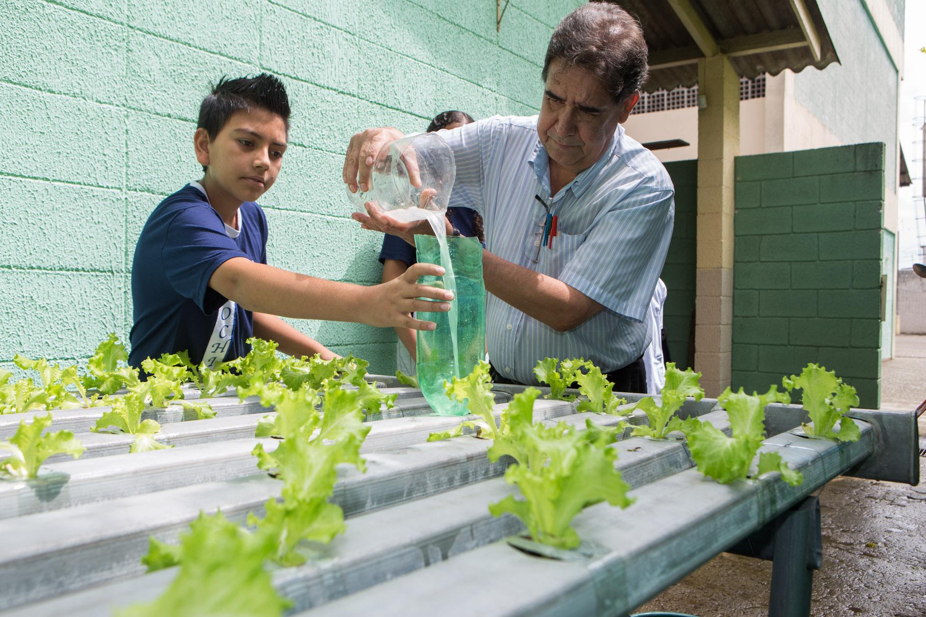 Escola pública em SP cultiva horta hidropônica e usa alimentos na merenda