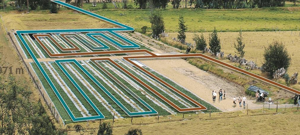 Plantas aquáticas são usadas para recuperar lago na Colômbia