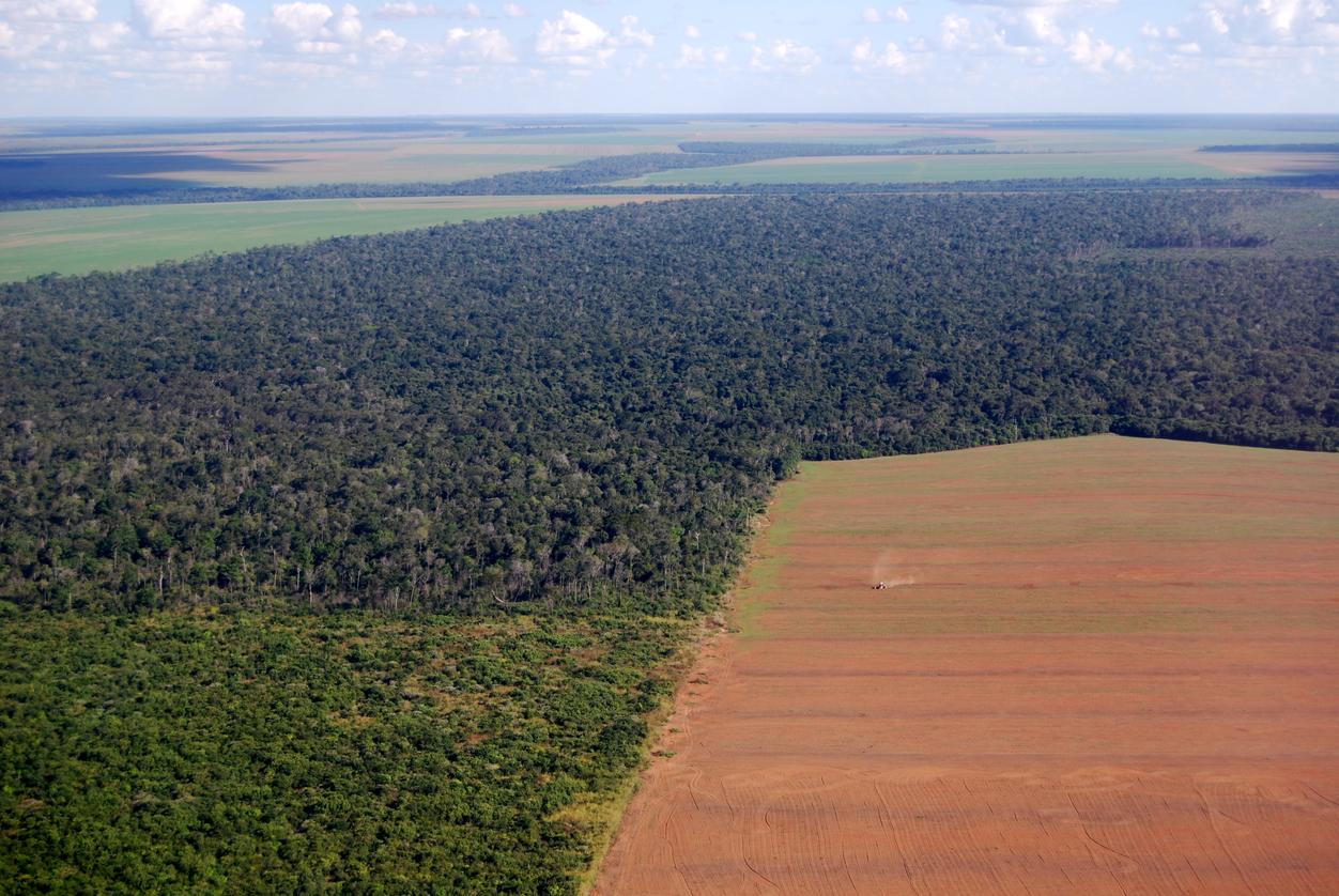 Governo surpreende com edital para monitoramento do desmatamento