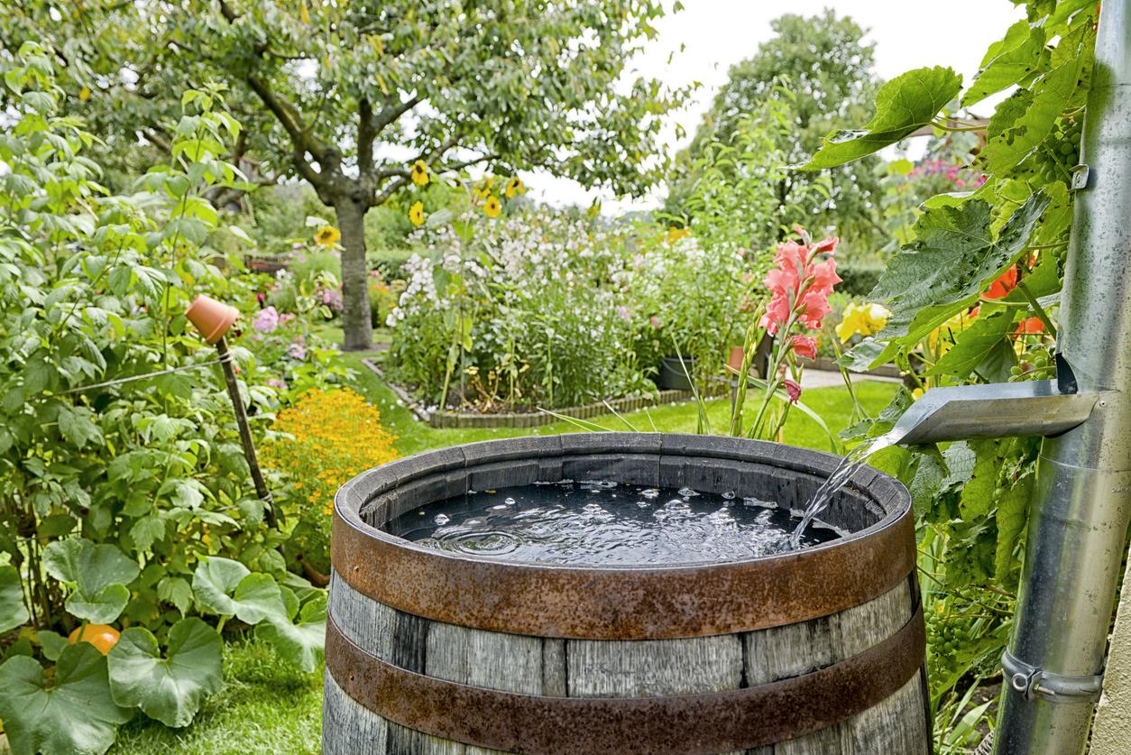 Palestra gratuita ensina a tratar o esgoto doméstico usando plantas