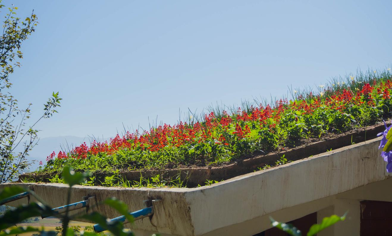 Em SP, oficina gratuita ensina a fazer telhado verde