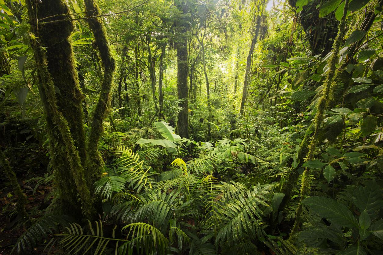 Mapeando plantas, pesquisadora sabe dizer quão conservada é a área