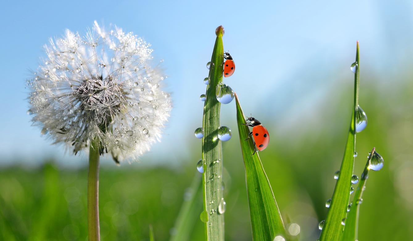 TNC promove concurso de fotografia sobre natureza