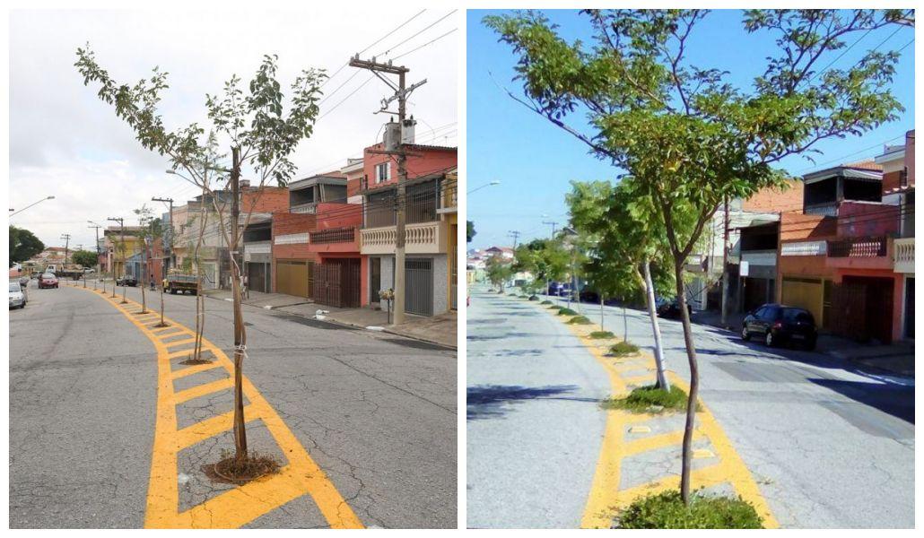 Saiba como estão as árvores plantadas no asfalto em São Paulo
