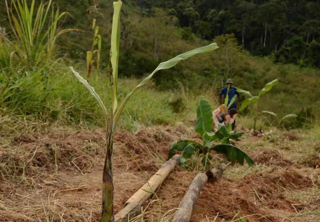 Foto: Sítio da Mata - Permacultura